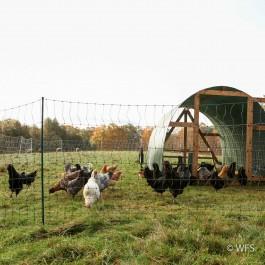 Plus PoultryNet™ 12/42/3 x 100', Green/Black