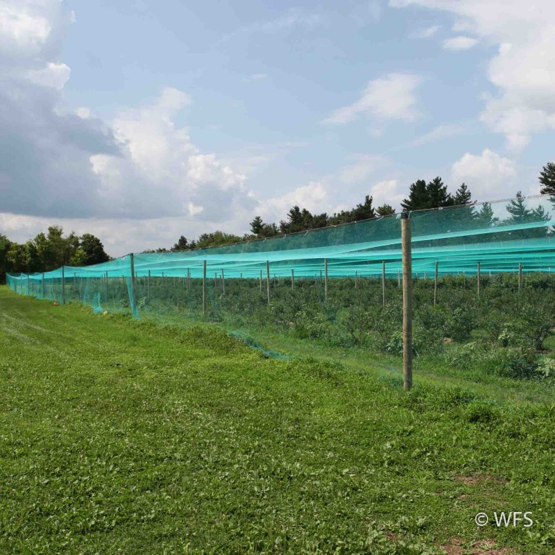 Smart Net Bird Netting, Side Curtain 12' x 337'
