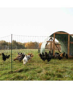 Plus PoultryNet™ 12/42/3 x 100', Green/Black