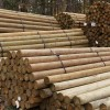 "Premium Lodge Pole Pine, PT 4-5"" x 7'"