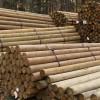 "Premium Lodge Pole Pine, PT 4-5"" x 9'"