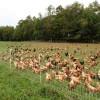 Plus PoultryNet™ 12/48/3 x 50', Black/White