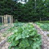 """36"""" High, 1"""" Hex Mesh Fence, Black Vinyl Coated, 150' Roll (Woven Wire)"""
