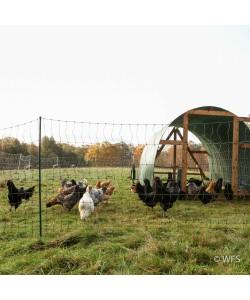 PoultryNet™ Plus 12/42/3 x 100', Green/Black