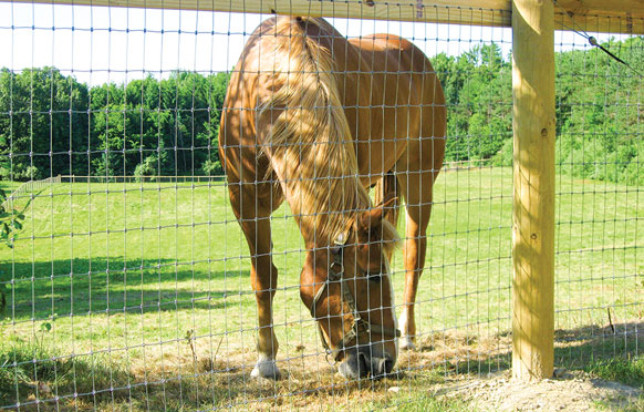 Equine Fencing from Wellscroft