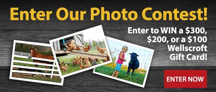 Wellscroft Photo Contest